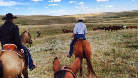 Cattle Drives, Bear Creek Guest Ranch