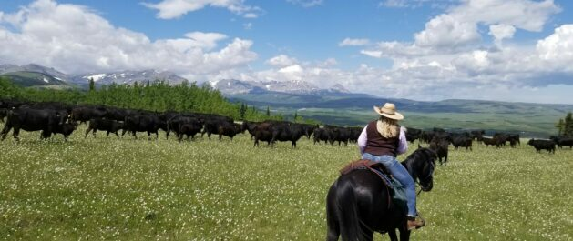 Home, Bear Creek Guest Ranch