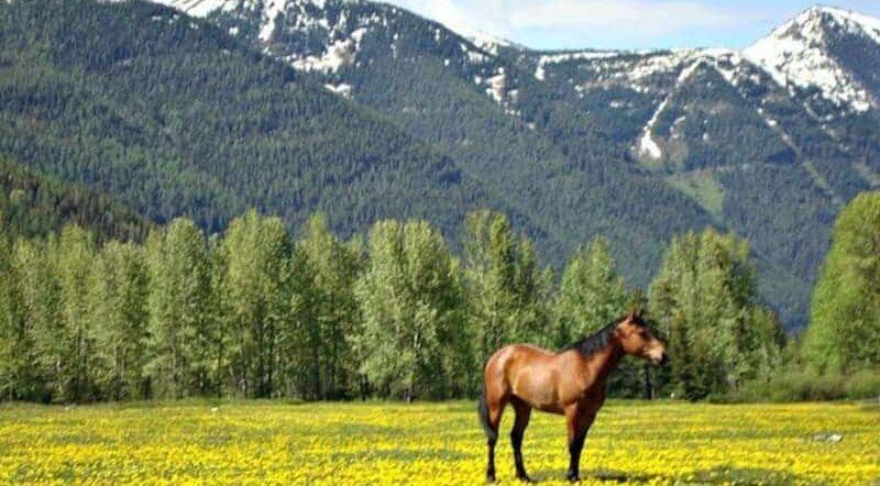 Keystone Pipeline Beer, Bear Creek Guest Ranch