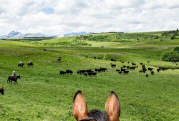 Ranch Activities, Bear Creek Guest Ranch